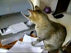 Fool Cat vs Printer
