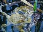 Funky Zoo: 101 - Deep Toad